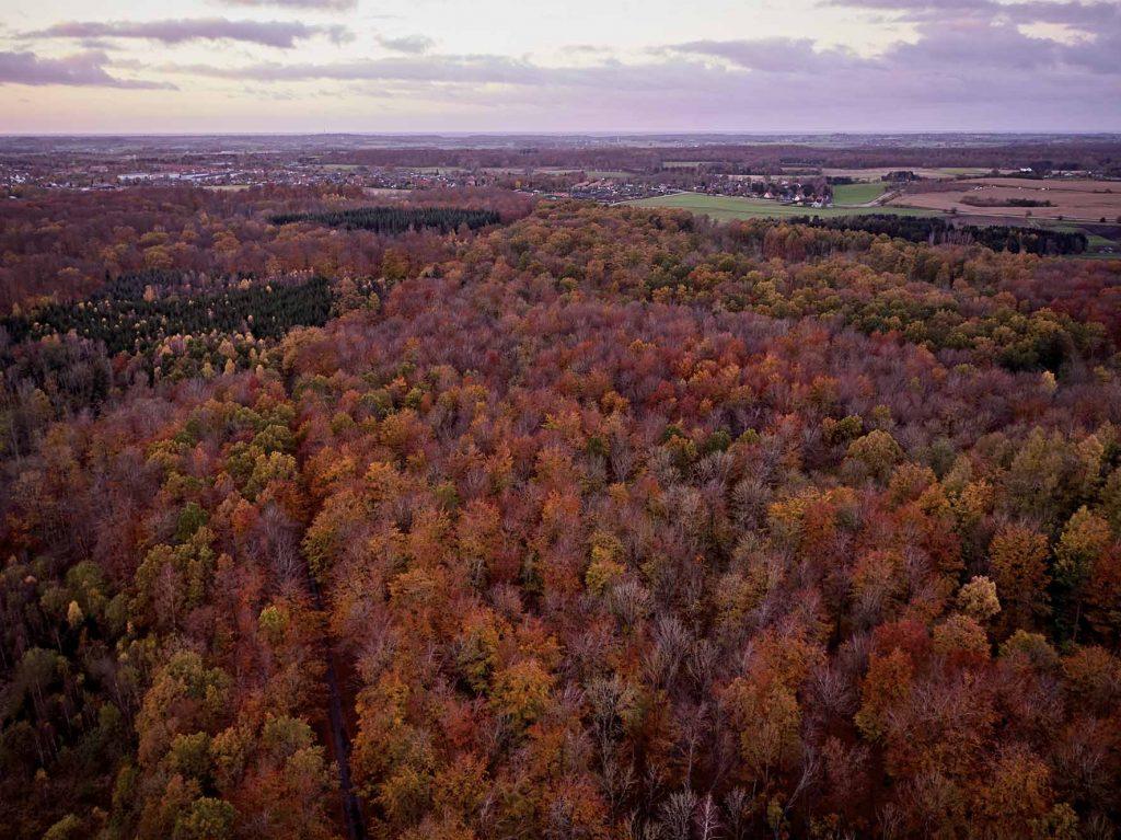 Efterår med drone Høbjerg Hegn